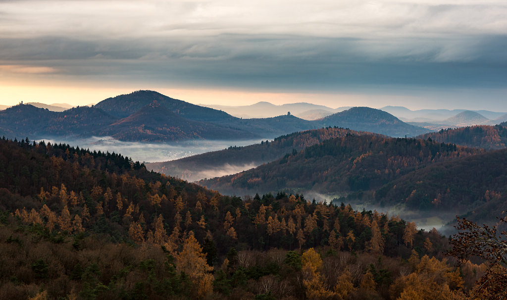 Lärchenwald